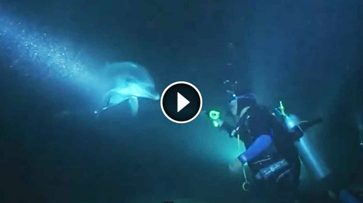 Injured Dolphin Approached Divers For Help. Nothing Could Prepare Them For What HAPPENED NEXT!