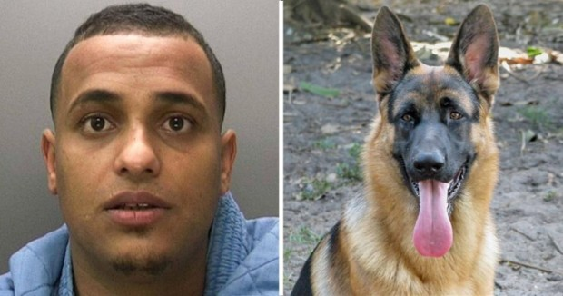 Muslim Man Gets HUMILIATED by a POLICE DOG! Try not to DIE Laughing!