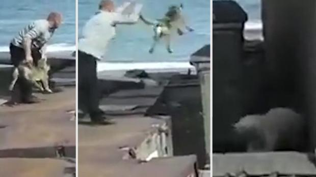 Man Throws Dog To Polar Bear 'To Distract It From Attacking Woman'